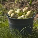 plantilla-manzana